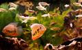 tropical fish - PhotoDune Item for Sale