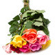bouquet of colorful  roses - PhotoDune Item for Sale