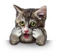 Surprised Cat - PhotoDune Item for Sale