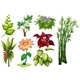Flower and Plant - GraphicRiver Item for Sale