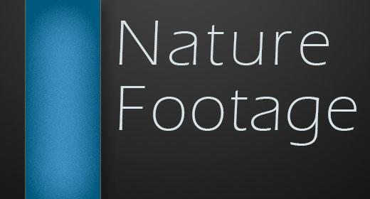 Macro Nature Footage