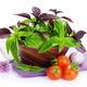 Fresh farmers tomatoes and basil - PhotoDune Item for Sale