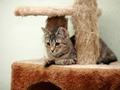 Striped domestic cat. - PhotoDune Item for Sale