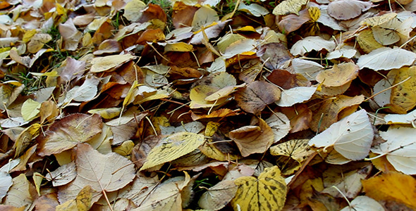 Falling Leaves Autumn