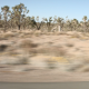 Joshua Trees - VideoHive Item for Sale