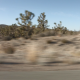 Joshua Trees 2 - VideoHive Item for Sale