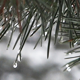 Winter Pine - 01 - VideoHive Item for Sale