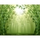 Bamboo Trees - GraphicRiver Item for Sale