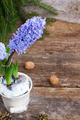 Hyacinths flowers - PhotoDune Item for Sale