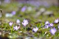 beautiful flower - PhotoDune Item for Sale