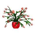 Christmas Cactus  - PhotoDune Item for Sale