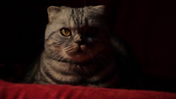 Serious Cat 2