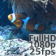 Clown Fish (2 shots) - VideoHive Item for Sale