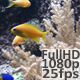 Coral Reef 1 - VideoHive Item for Sale
