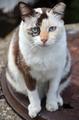 Cute striped street cat - PhotoDune Item for Sale