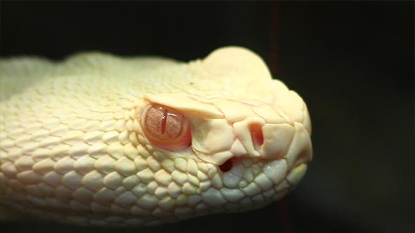 Pit Viper Look