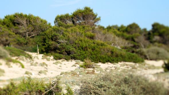 Mallorca Beach 05