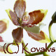 Opening Orchid Flower  - VideoHive Item for Sale