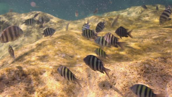 Snorkel Underwater Caribbean Beach Mexico 2