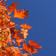 Autumn Foliage and Blue Sky - VideoHive Item for Sale