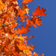 Colorful Autumn and Blue Sky - VideoHive Item for Sale