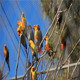 Parrots On The Tree - VideoHive Item for Sale