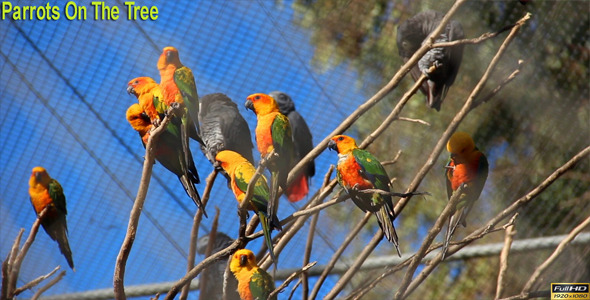 VideoHive Parrots On The Tree 9861564