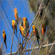 Birds On The Tree - VideoHive Item for Sale