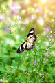 butterfly and flower grass - PhotoDune Item for Sale