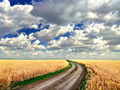 Dirt road in the middle of a wheat field - PhotoDune Item for Sale