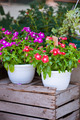 Bright flowers in white pots on a wooden box - PhotoDune Item for Sale