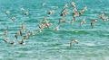 Birds flying over water - PhotoDune Item for Sale