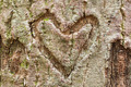 Bark Heart - PhotoDune Item for Sale