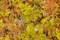 Lichen Covered Rock - PhotoDune Item for Sale