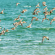 Birds flying over water - PhotoDune Item for Sale