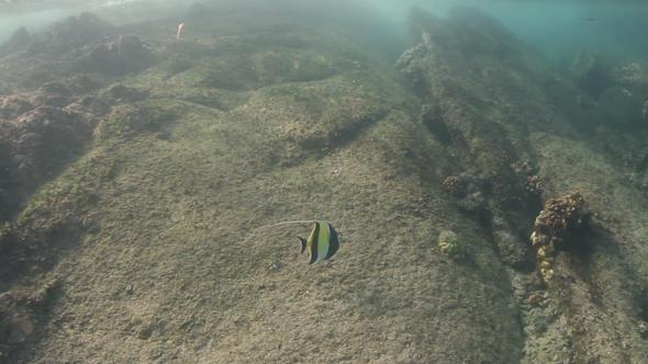 Snorkel Underwater Caribbean Beach Mexico 17