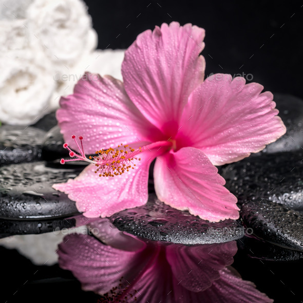 spa concept of delicate pink hibiscus with drops and white stac