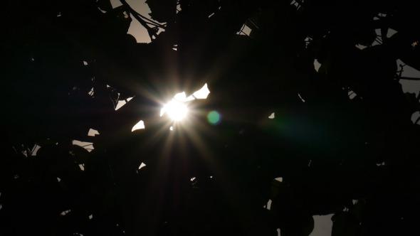 Sun Ray Through Silhouette Leaf