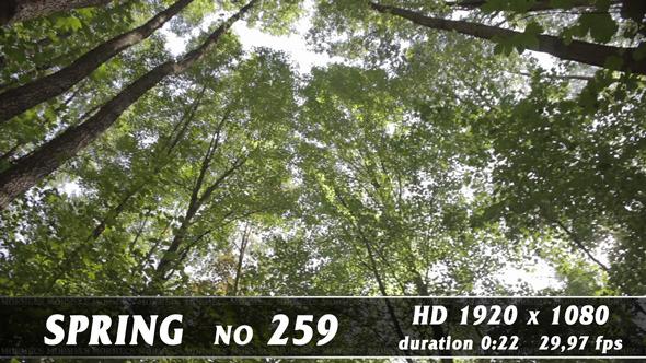 Spring No.259