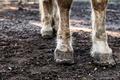 Horse Legs - PhotoDune Item for Sale