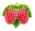 Raspberry - PhotoDune Item for Sale