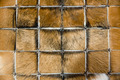 Carpet of animal fur - PhotoDune Item for Sale