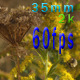 Bee Pollinating Goldenrod Flowers - VideoHive Item for Sale