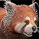 Red Panda - 3DOcean Item for Sale