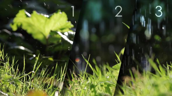 Grass Under a Rain