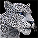 Snow Leopard - 3DOcean Item for Sale