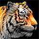 Tiger - 3DOcean Item for Sale