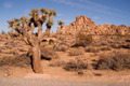 Joshua Tree With Rock Formation Landscape California National Park - PhotoDune Item for Sale