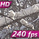 Solar Snowflakes - VideoHive Item for Sale