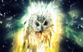 Owl, Abstract Animal Concept - PhotoDune Item for Sale